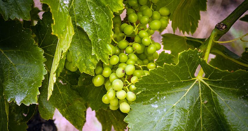 Rioja tour: premium wine tasting 6