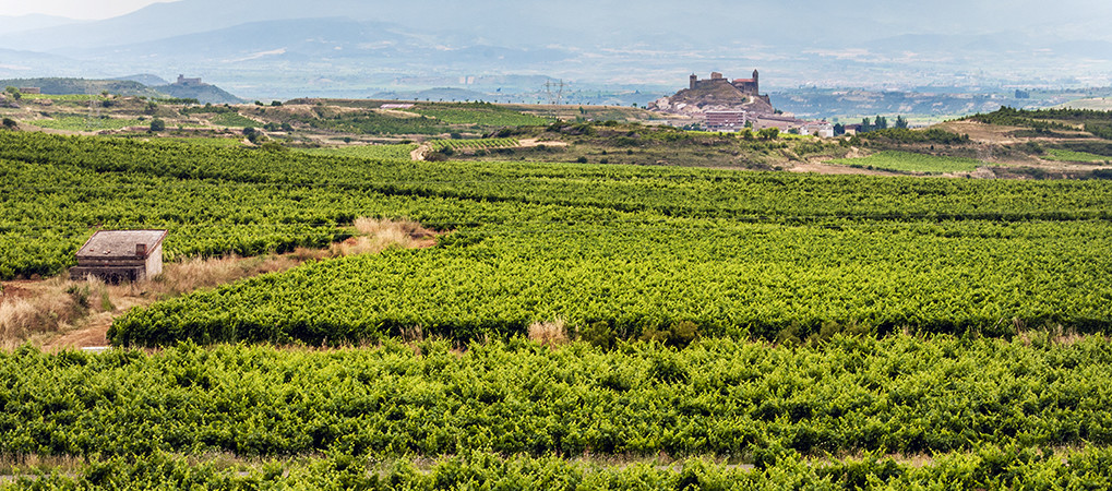Rioja tour: premium wine tasting 7