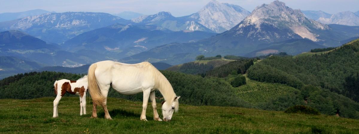 Izarraitz Mountain Trekking 4