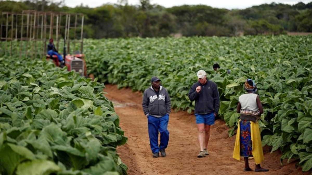 Zimbabwe white farmers compensation