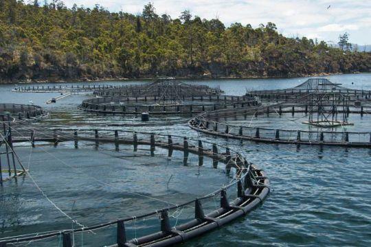 salmon farmers