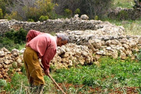 Maltese farmer