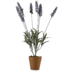 Lavendel i potte H:49 cm dusty