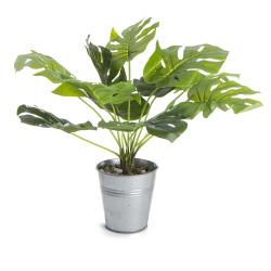 Plante Monstera med zinkpotte H: 30cm