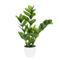 Plante Zamioculcas grønn 54cm