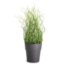 Gressplante H:36cm