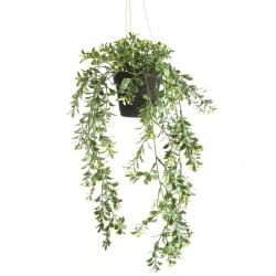 Hengeplante H:46cm