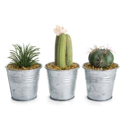 Kaktus i zinkpotte H:11cm