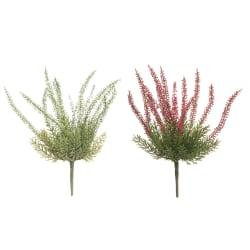 Plante Calluna 2 ass lilla hvit 28cm
