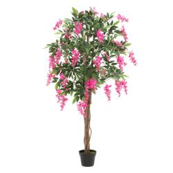 Plante Wisteria på stamme fuchsia 155cm