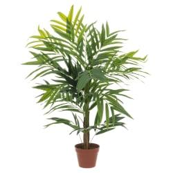 Plante kentiapalme 107cm