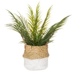 Plante palme med kurv 50cm