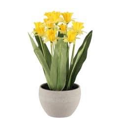 Plante påskelilje i potte gul 24 cm