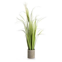 Gressplante Evig m/sementpotte 91,5 cm