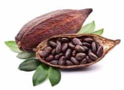kakó termése - KETObrü | 100% természetes kakaó | FGXpress információ