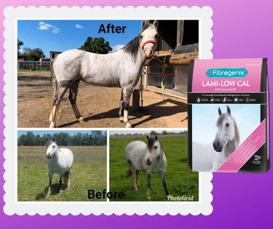 Laminitic horses 1