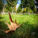 Yaprak dökümü