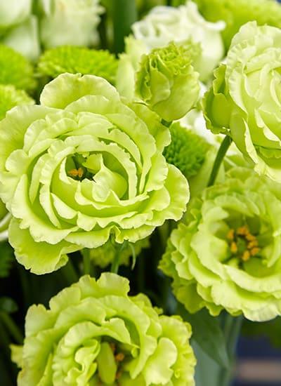 green lisianthus