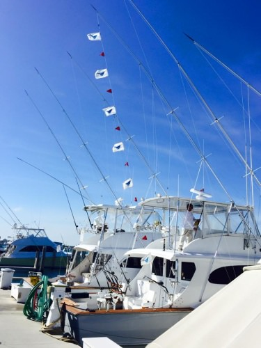The sailfish bite is on fire aboard the Osprey! 13 sailfish caught by 2pm.  Call Captain Joe today 410-977-9669 to book your fishing trip.