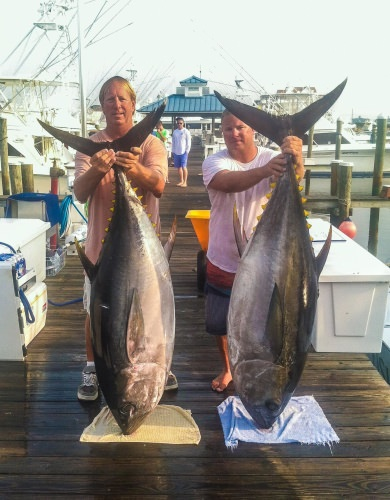 Captain Joe with two killer Tunas caught aboard the Osprey in Ocean City, MD. To book your fishing trip aboard the Osprey call Capt. Joe 410-977-9669.