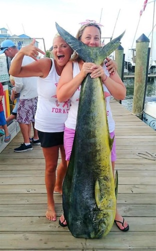 Kristy Frashure landed a new Maryland state record 74.5 pound dolphin while fishing the Poor Girls Open on the Haulin n Ballin in Ocean City. The old record only lasted two weeks or so. #Fishing #OCMD #HaulinNBallin #GirlsWhoFish #PoorGirls #FinandField