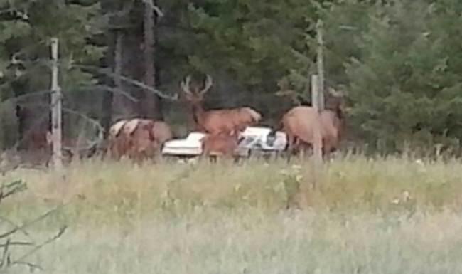 My back yard friends!