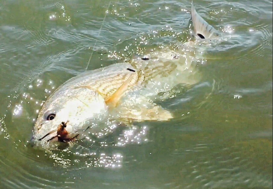 Old City Guide Service : Guided fly fishing trip