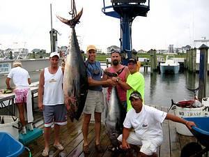 Jade Ii Sportfishing: Shark Charters