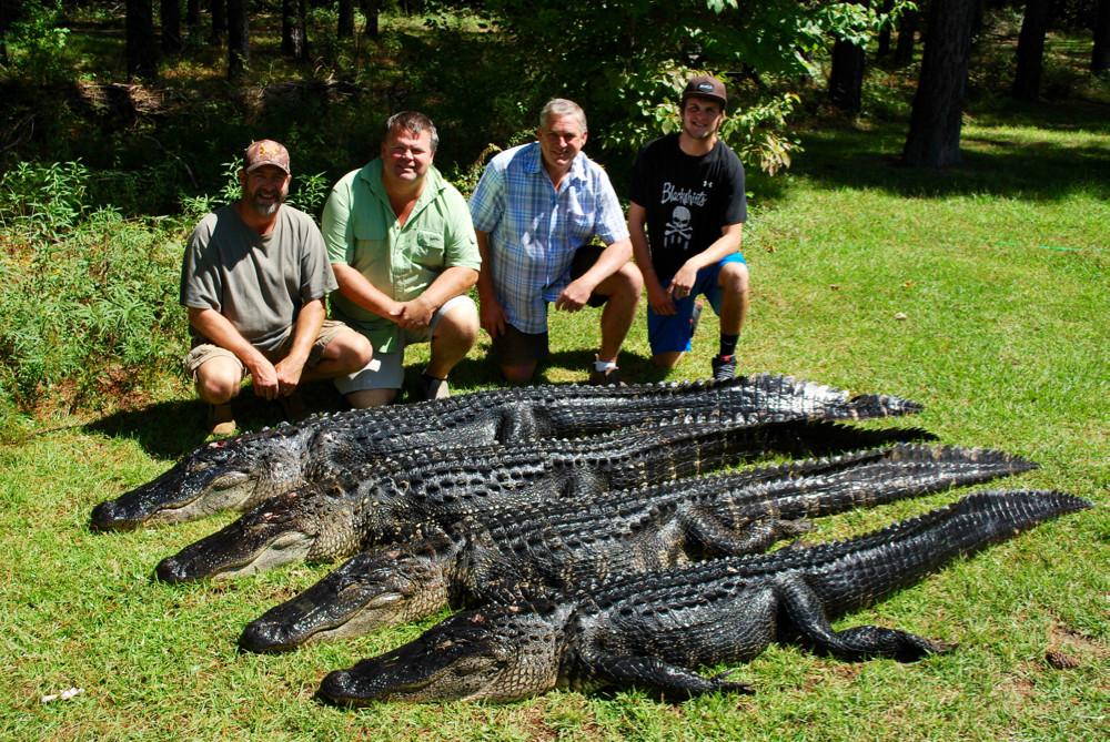 Red Bluff Lodge: Alligator Hunt