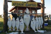 Afishunt Charters Inc:  Seward Silvers/ Variety Fishing Trips