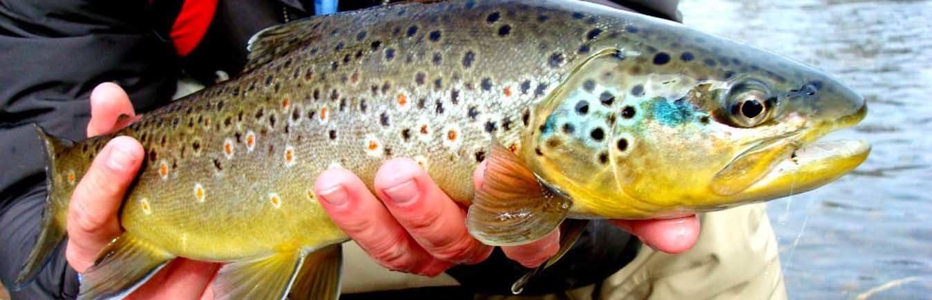 St. Louis Fin & Field Hunting & Fishing: Trout Fishing