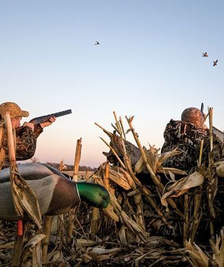 St. Louis Fin & Field Hunting & Fishing: Duck Hunting