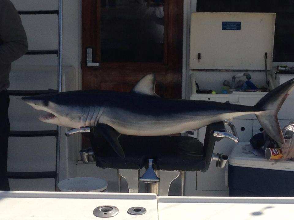 Integrity Charter Fishing: Night Shark Fishing Trip