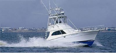 Stolat Fishing Charters: Shark Fishing Trip