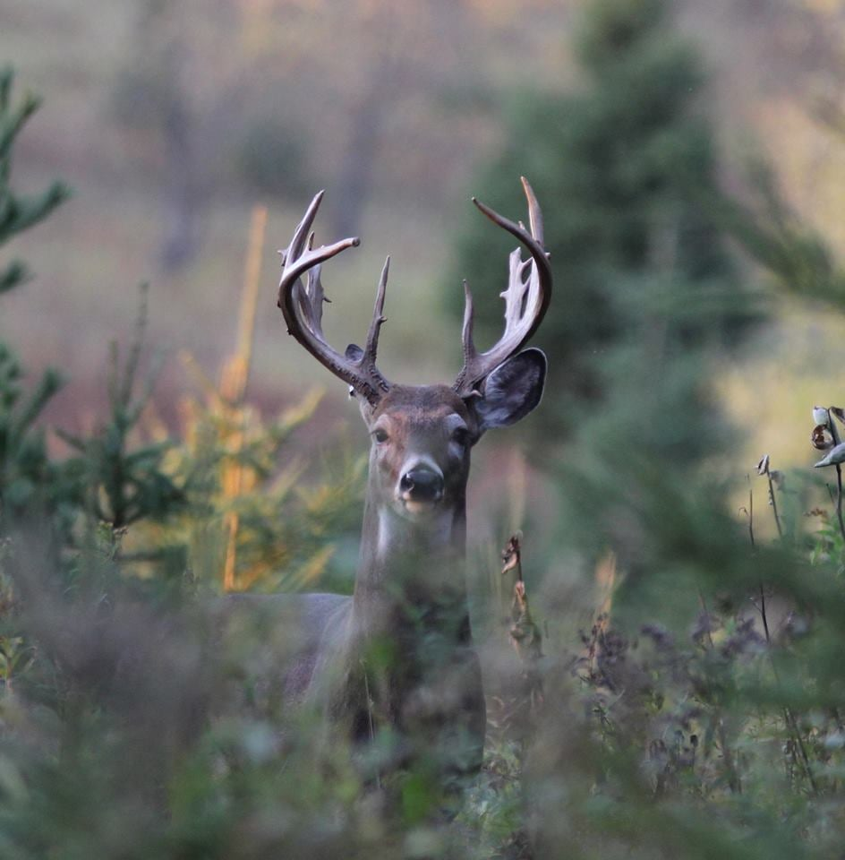 The Wilderness Reserve LLC: Trophy Whitetail