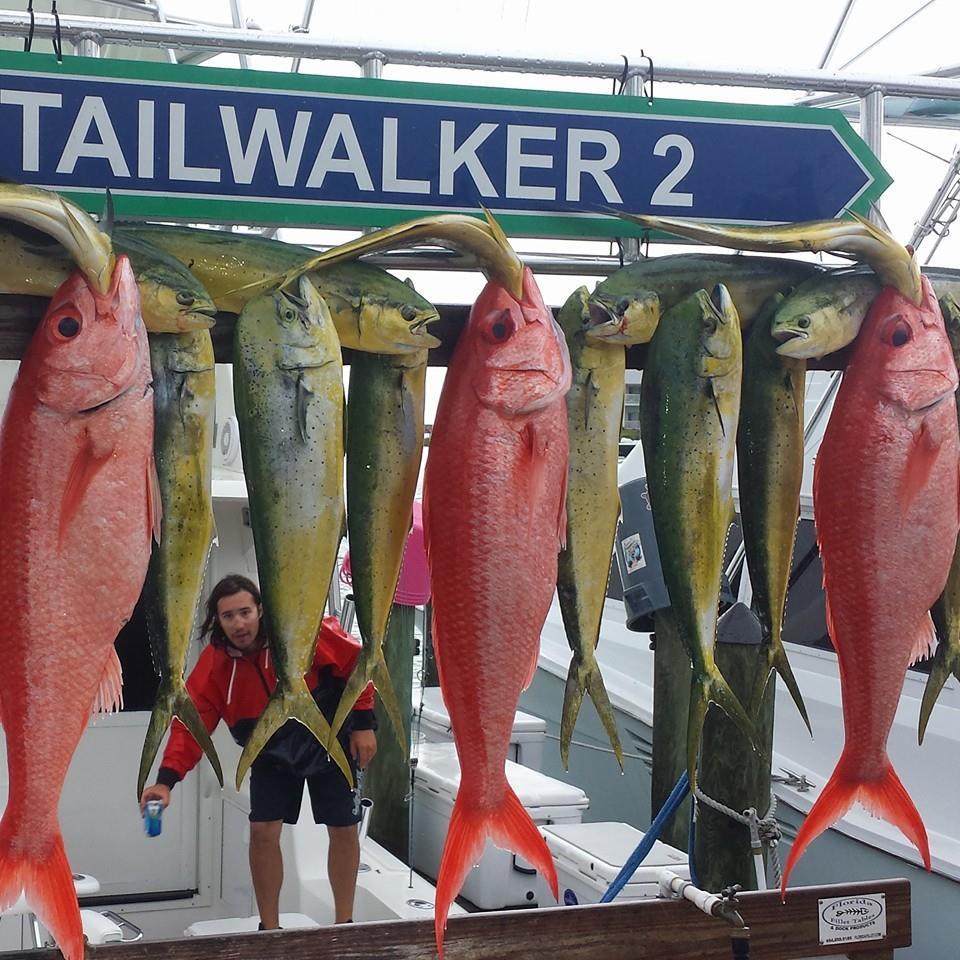 Tailwalker Charters: Tailwalker 1  1/2 Day Reef