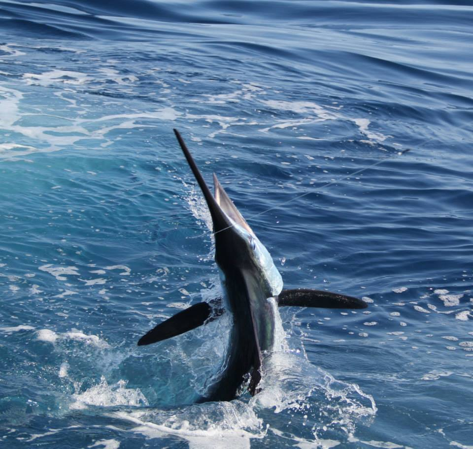 Rhonda's Osprey Charter Fishing: Singer Island, FL Offshore