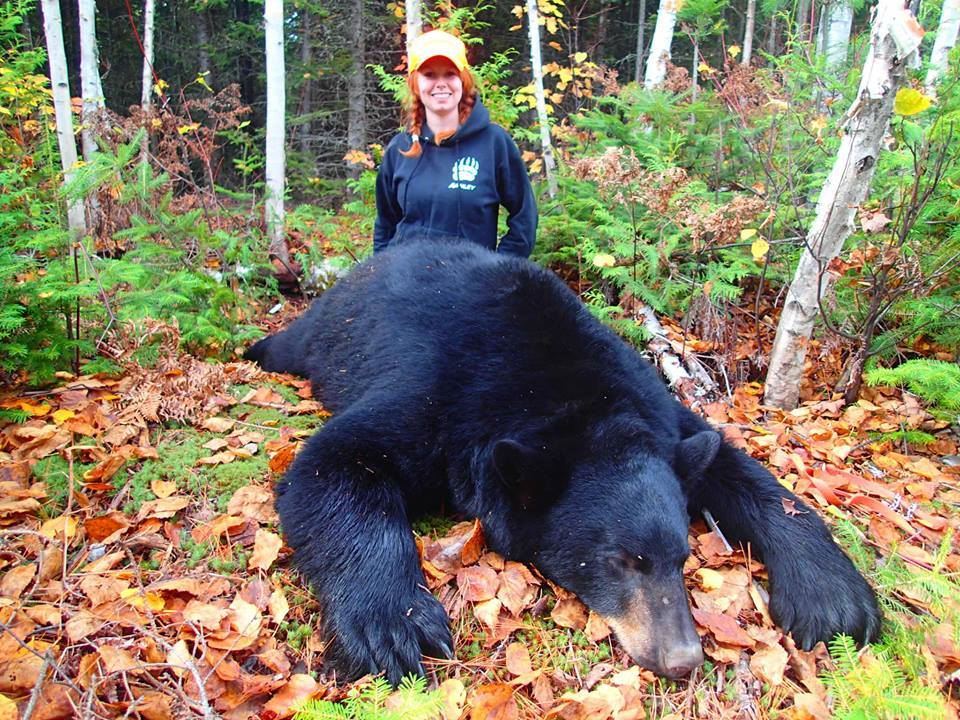 Maine Trophy Outfitters: Black Bear Guided Hunt