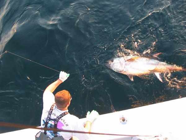 Canyon Runner Charter Boat: 48 Blue Fin Tuna Mar. 1 - April 15