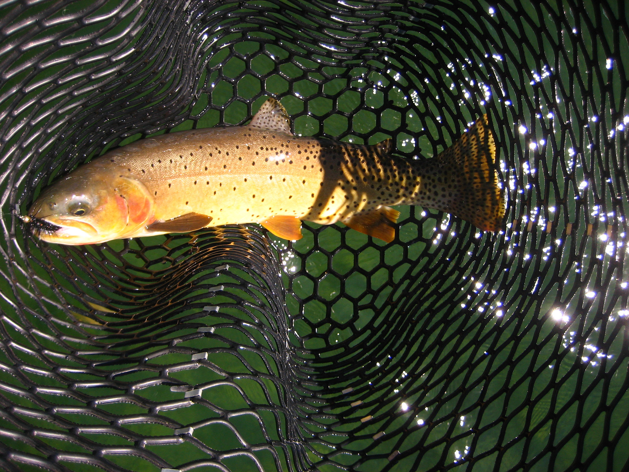 Teton Troutfitters: Jackson Hole Snake River Guided Fishing Trips