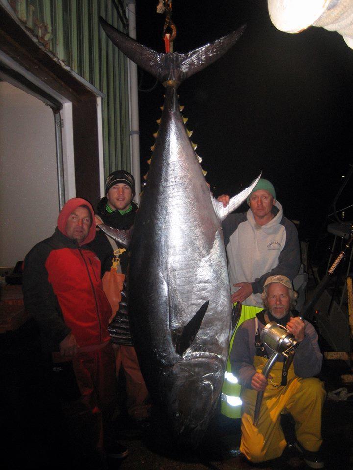Tuna Hunter Fishing Charters: Giant Bluefin Tuna Fishing Overnight