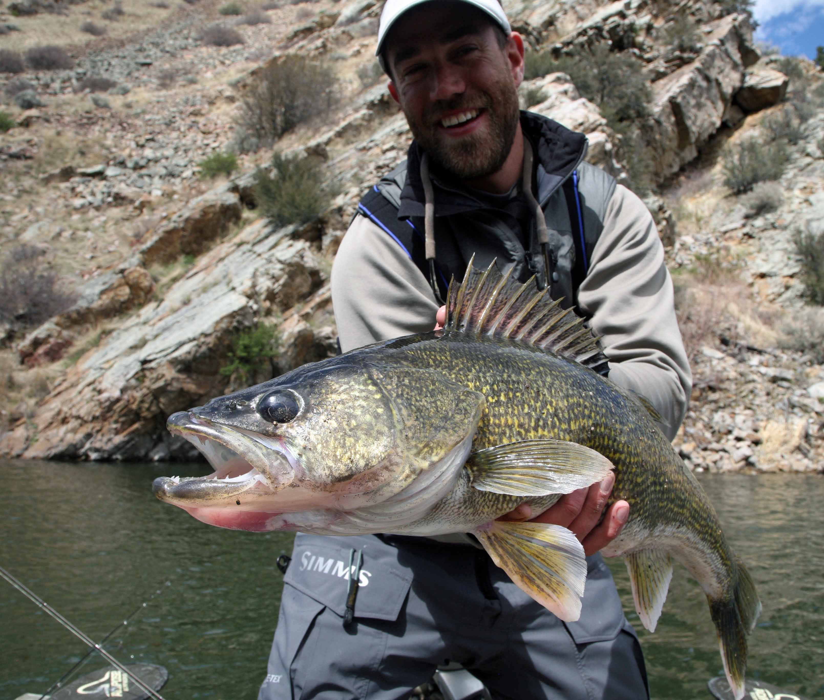 Agee Outfitting: Missouri River Walleye