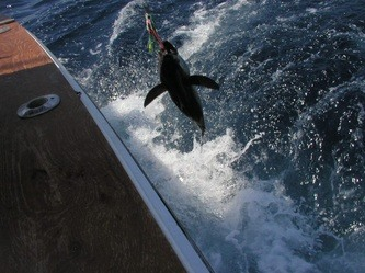 Hot Tuna Charters: Canyon: Two Day Overnight