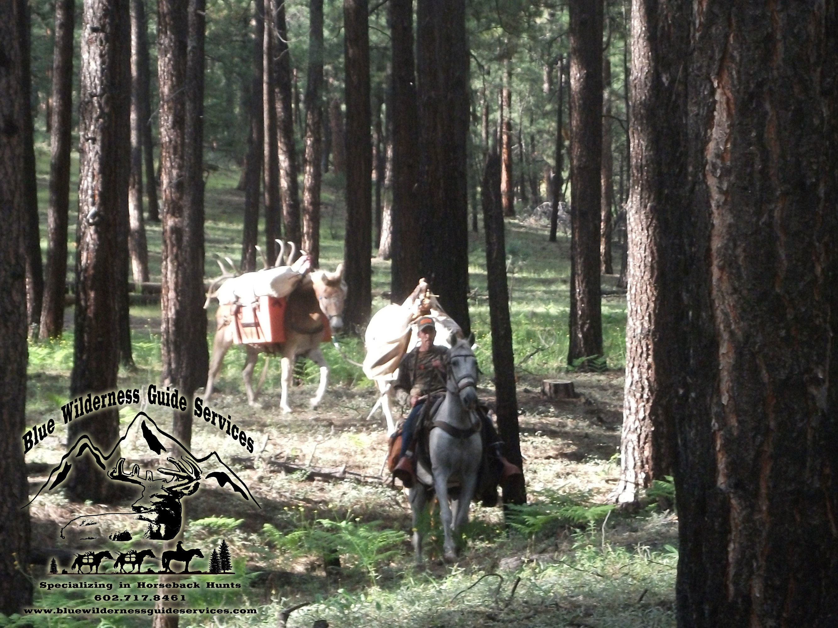 Blue Wilderness Guide Services: Coues Deer