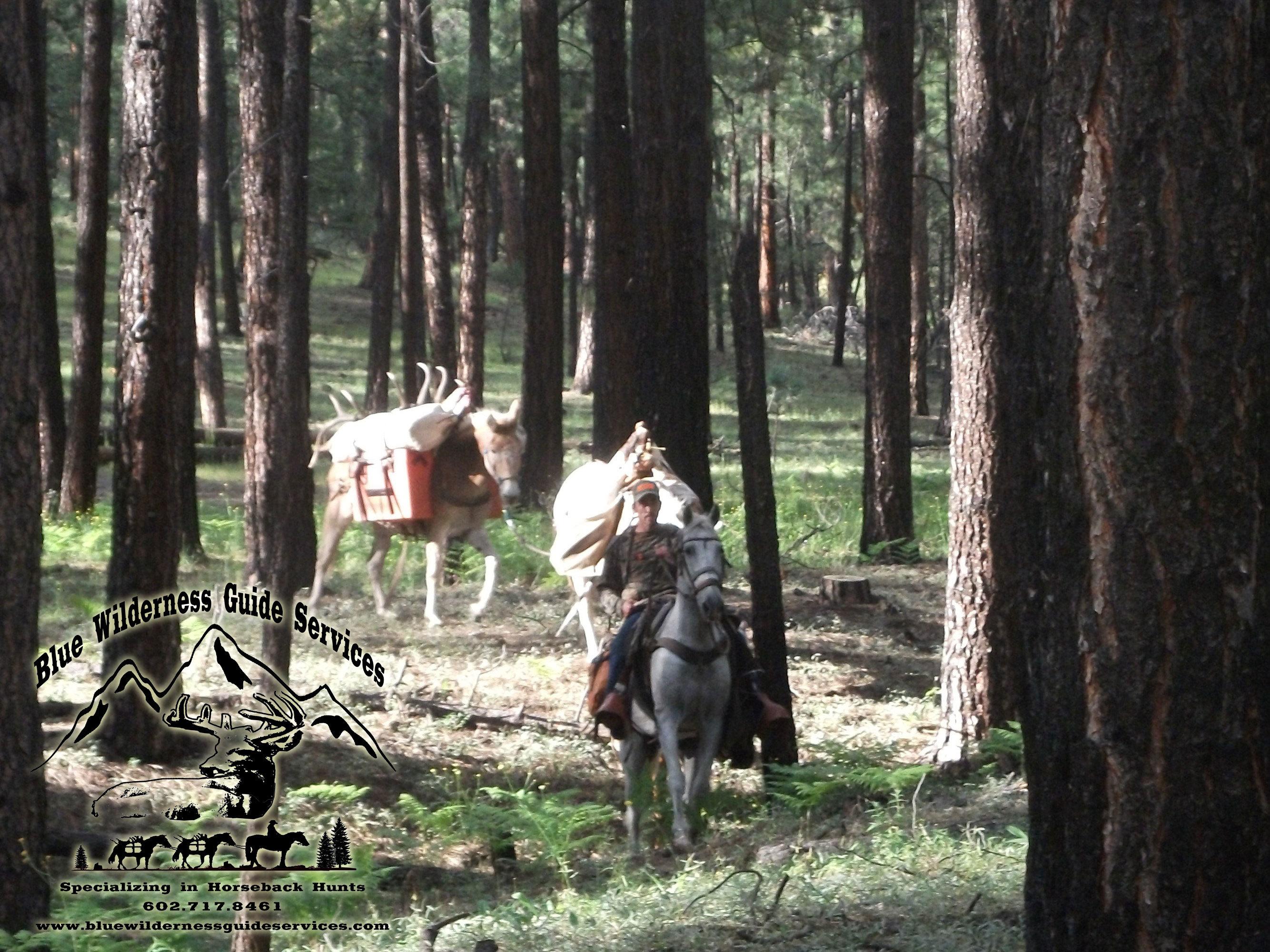 Blue Wilderness Guide Services: Archery Elk