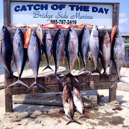 "Fish Commander Offshore Fishing Charters: BOTTOM DEEP SEA FISHING  42"""