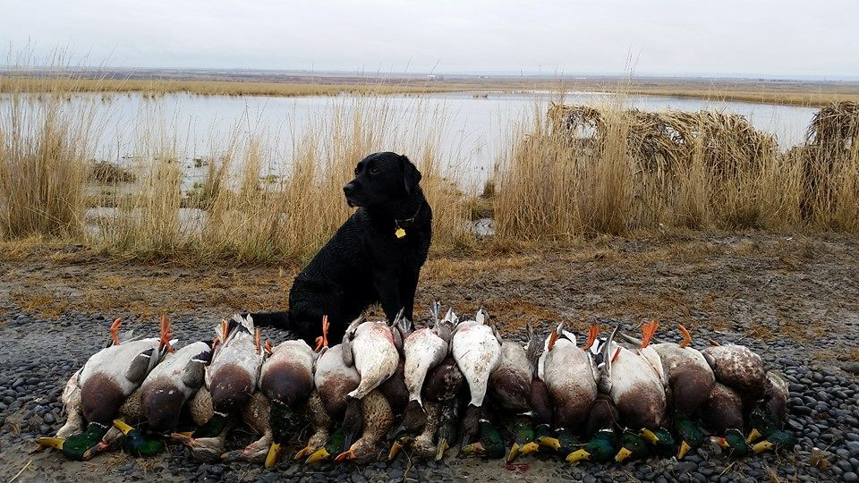 Pacific Wings Waterfowl Adventures: Washington Corporate Hunt