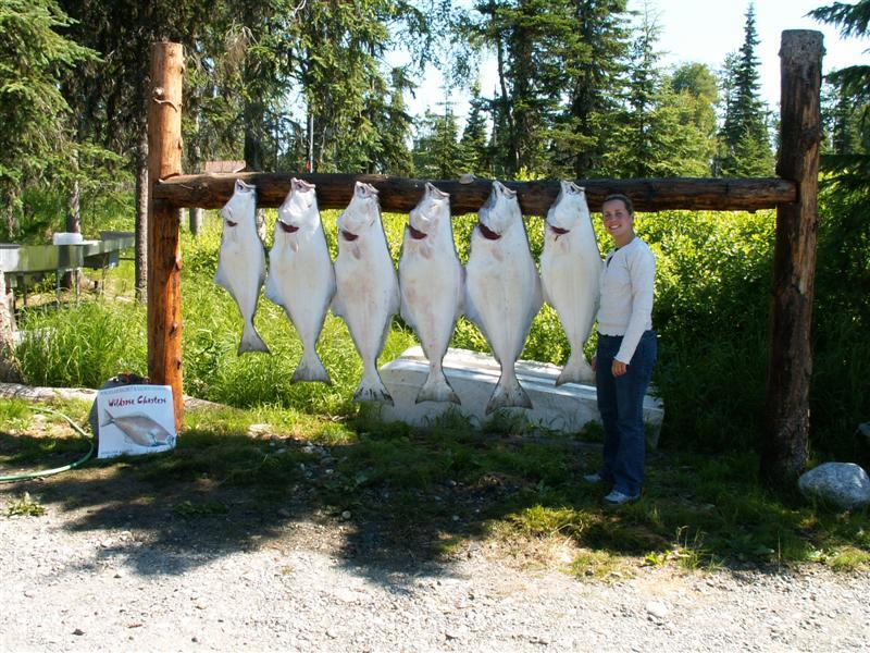 Wildrose Charters And Cabins: Kasilof River Salmon (driftboat only)