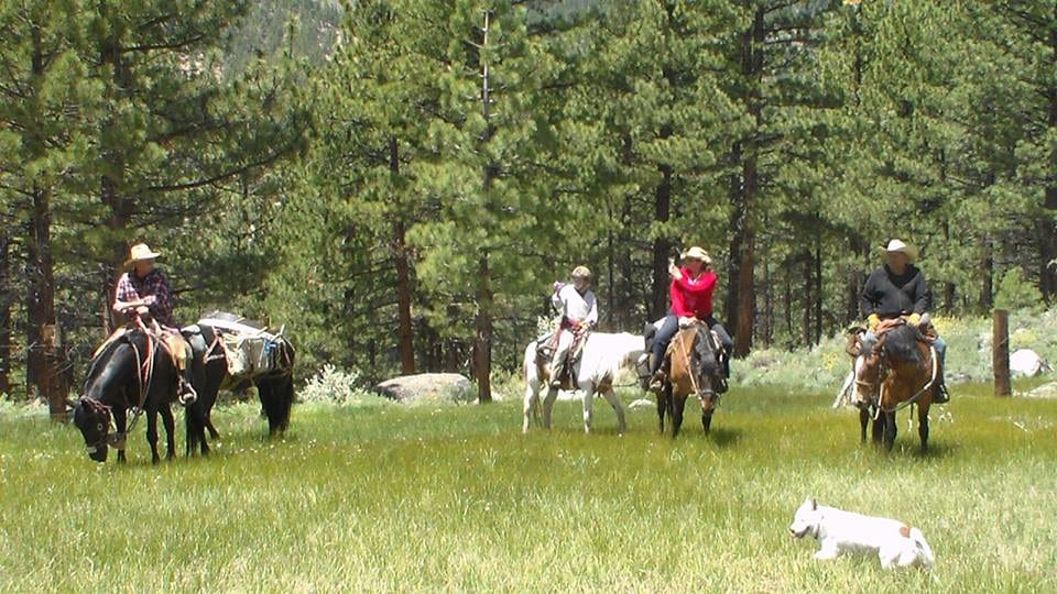 Sage N Pine Guide & Outfitters: Cow Elk early/late hunt (5 day)