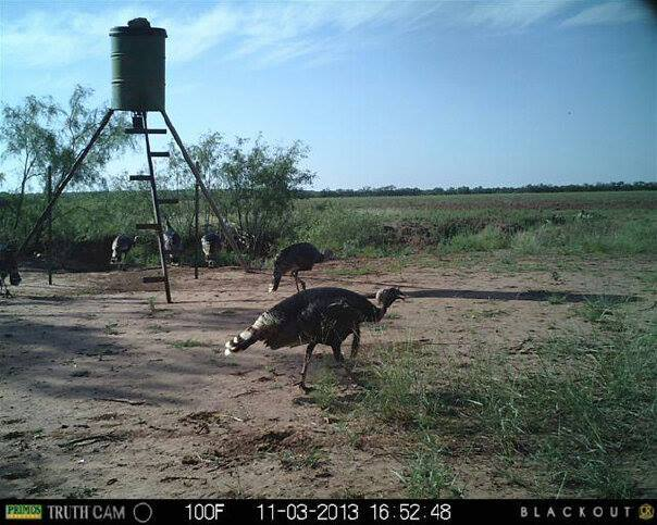 Salt Fork Ranch And Outfitters: Turkey Hunts